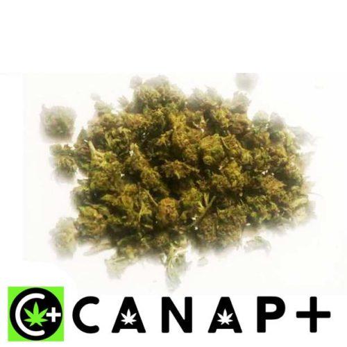 Trinciato Cannabis C+Farm