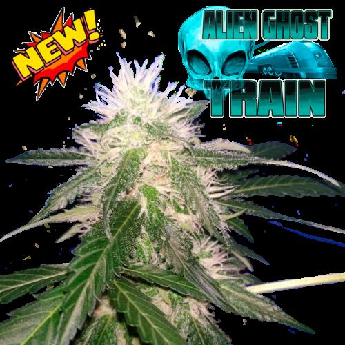 semi femminizzati Alien Ghost Train