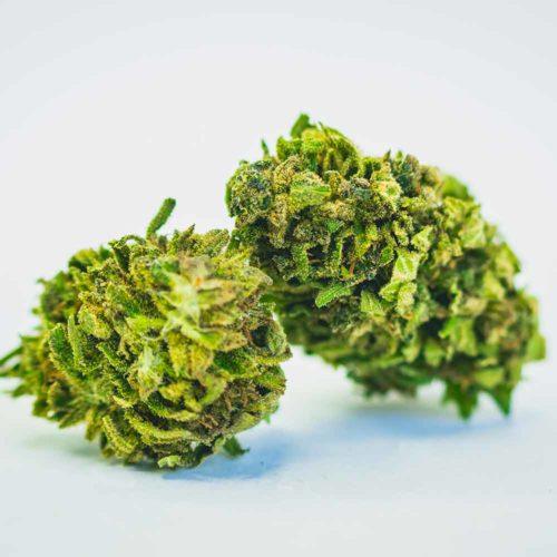 critical-mass CBWEED | HemporioEmilia | Cannabis legale | Castel San Pietro Terme | Bologna
