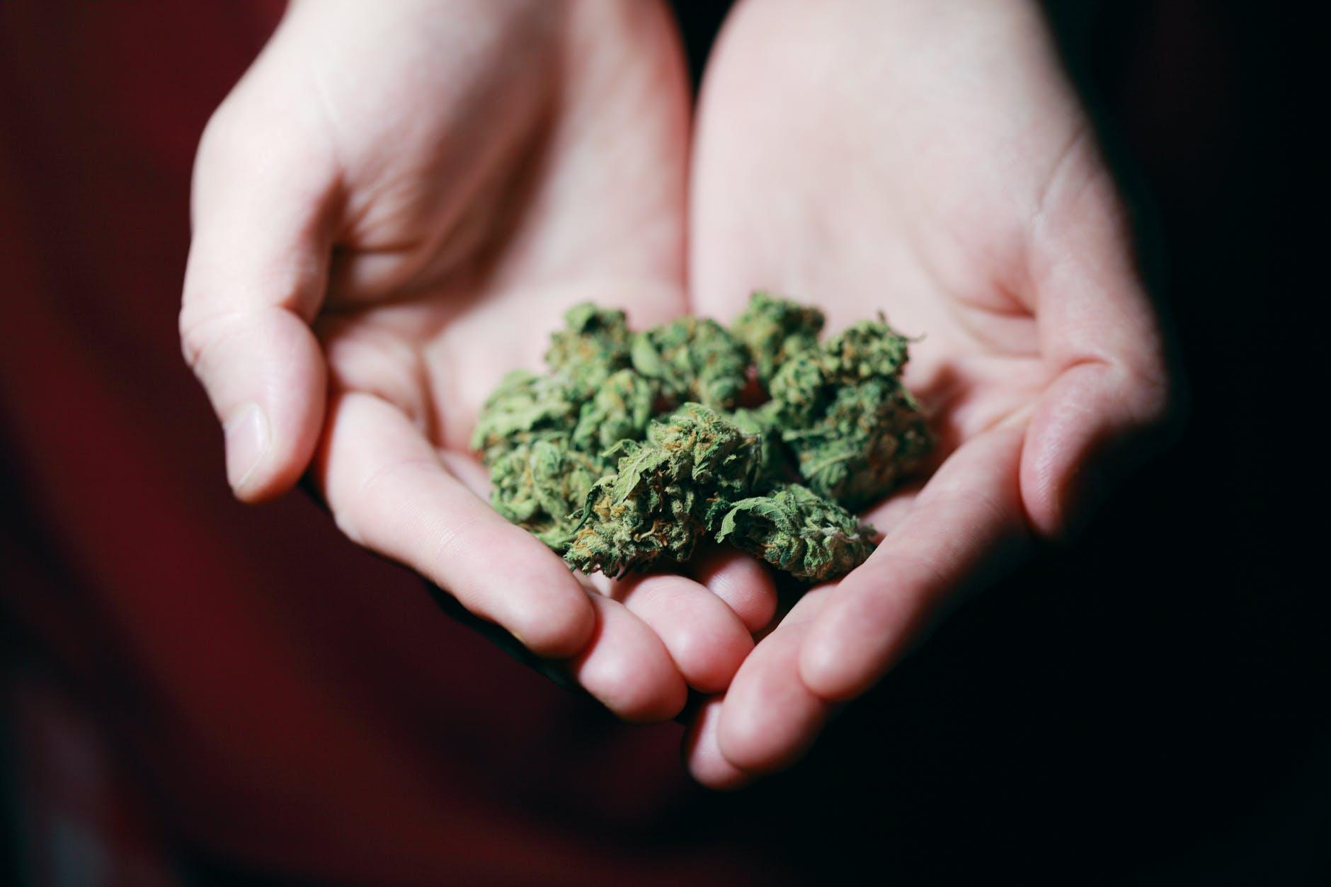 Fiori Infiorescenze Cannabis Light Canapa Legale Hemporio Emilia