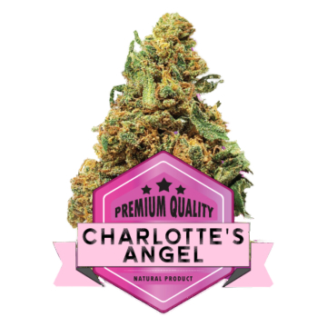 Charlotte's Angel CpiuFarm