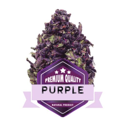 Purple CpiuFarm