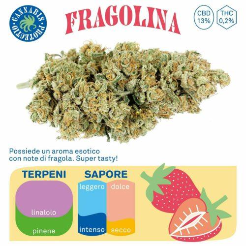 Fragolina cannabis protectio