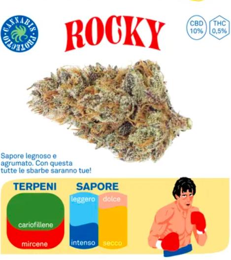 rocky cannabis protectio